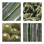 """Cacti Textures Collage"" by Groecar"