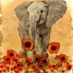 """Elephant in The Poppies"" by LJdesigns"