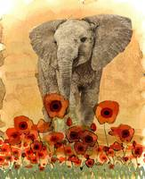Elephant in The Poppies