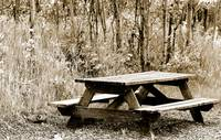 Weathered Picnic Table in a Forest