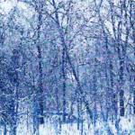 """Snow Like Flowers"" by SplitWindow"