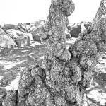 """SF Bay Tree Trunk Study 2"" by robertmeyerslussier"