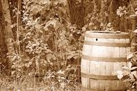 Antique Wood Barrel Left in a Forest