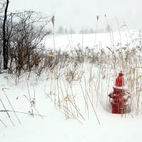 Fire Hydrant In The Snow Art Prints & Posters by Dawn Eves