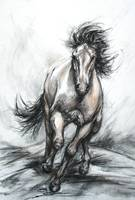 Galloping Steed by Janet Ferraro Fine Art