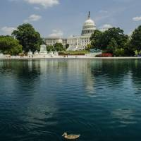 U S Capitol with Duck Art Prints & Posters by Allen Sheffield