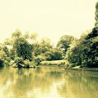 Botanic Garden Singapore, 2015 Art Prints & Posters by Forever Summer Design