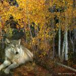 """autumn aspens wolf"" by rchristophervest"