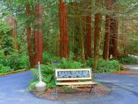 Enjoy The California Redwoods