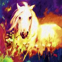 White Stallion Horse in Field