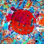 """Toddler Turtle Red"" by Saturato"