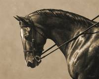Brown Dressage Horse In Sepia