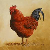Rhode Island Red Rooster