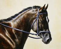 Dark Bay Dressage Horse