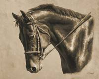 Chestnut Dressage Horse In Sepia