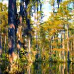 """Cypress Gardens South Carolina"" by GinetteCallaway"