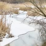 """Winter Slumber"" by zapgrafx"