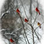 """Cardinal Tree in Winter"" by KsWorldArt"