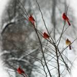 """""""Cardinal Tree in Winter"""" by KsWorldArt"""