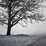 """""""Winter Fog"""" by GracefulFoto"""