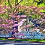 """White Picket Fence by Flowering Trees"" by susansartgallery"