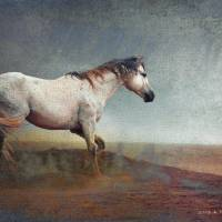 dust storm white horse  by r christopher vest