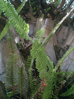 Ferns on a Palm Tree 9