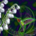 """Hummingbird and Lily of the Valley"" by EdmondHogge"