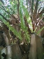 Ferns on a Palm Tree