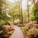"""The Azalea Path"" by JessicaJenney"