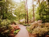 The Azalea Path