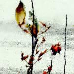 Attenuated Winter
