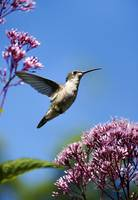 Modern Hummingbird Beauty