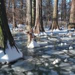 """Winter on Reelfoot Lake"" by jones3006"