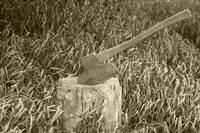 Antique Broad Ax in a Stump of Wood
