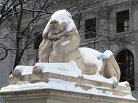 New York Public Library Lion 2015