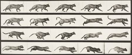 EADWEARD MUYBRIDGE, (1830 - 1904), CAT TROTTING, C