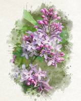 Lilac Flower Bouquet Watercolor Painting