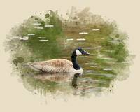 Canada Goose Watercolor Painting