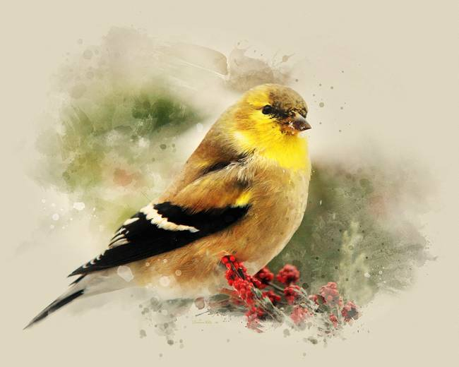 American Goldfinch Painting American Goldfinch Watercolor