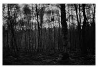 into_the_woods_darkly