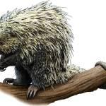 """""""Brazilian Porcupine"""" by inkart"""