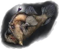Black Seadevil or Anglerfish