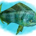 """Common Dolphinfish or Mahi-Mahi"" by inkart"
