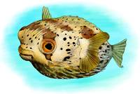 Long-Spine Porcupine Fish