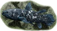 West Indian Ocean Coelacanth
