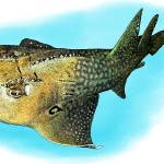 """Bowmouth Guitarfish"" by inkart"