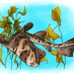 """California Horn Shark"" by inkart"
