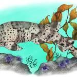 """California Swell Shark"" by inkart"