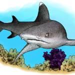 """""""Whitetip Reef Shark"""" by inkart"""